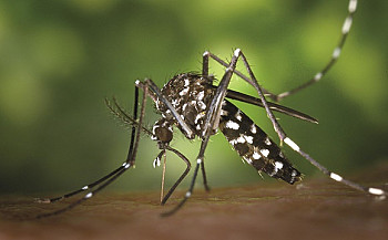 4420 cases of Dengue fever and 1460 cases of Chikungunya reported so far this year – HPA